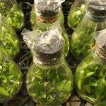Растения, которые можно высаживать в грунт