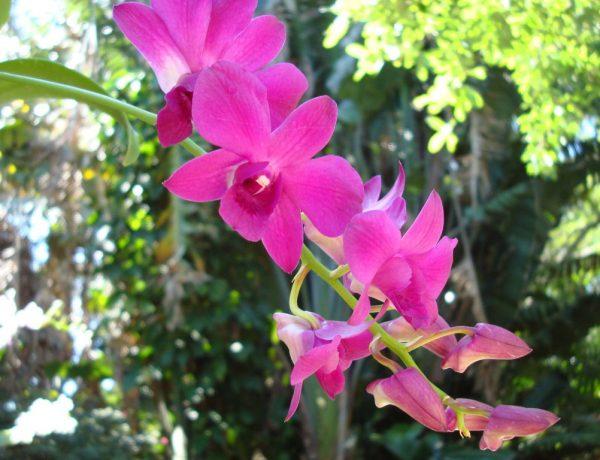 Выращивание орхидей из семян в домашних условиях: сложно, но возможно
