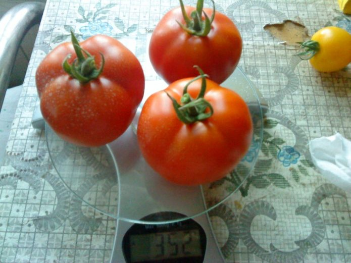 Плоды помидора Лабрадор