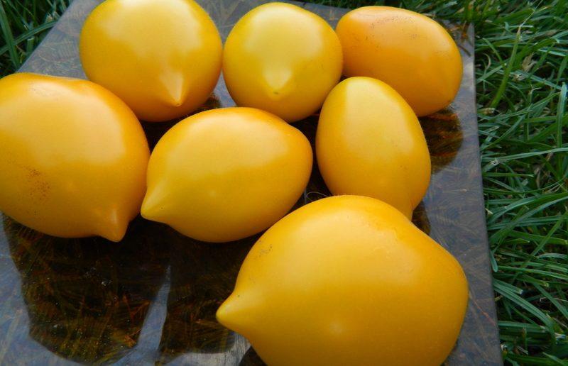 томаты чудо света отзывы фото