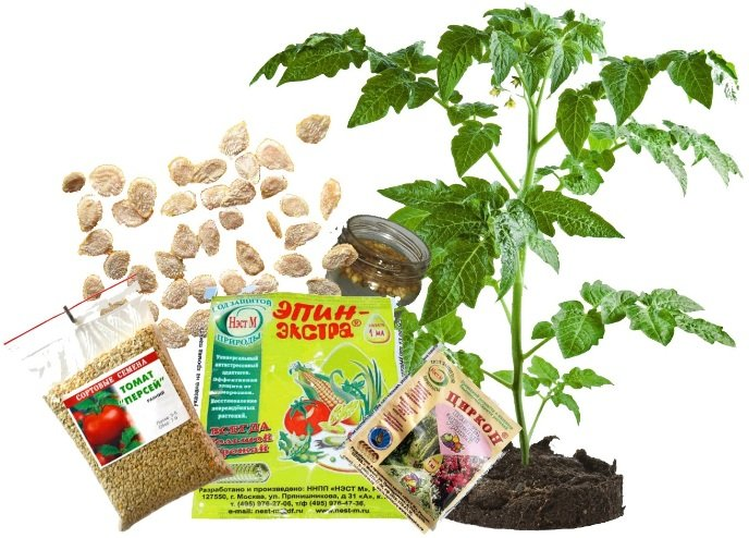 Предпесевная подготовка семян помидор