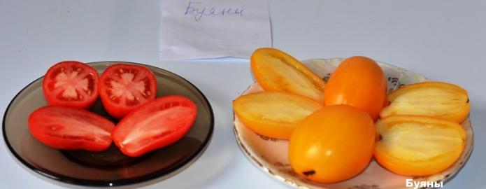 Плоды томатов Буян