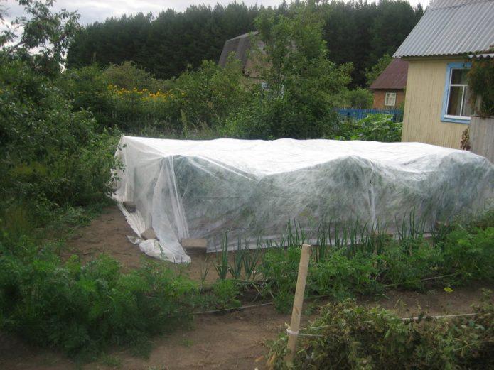 Временное укрытие для томатов