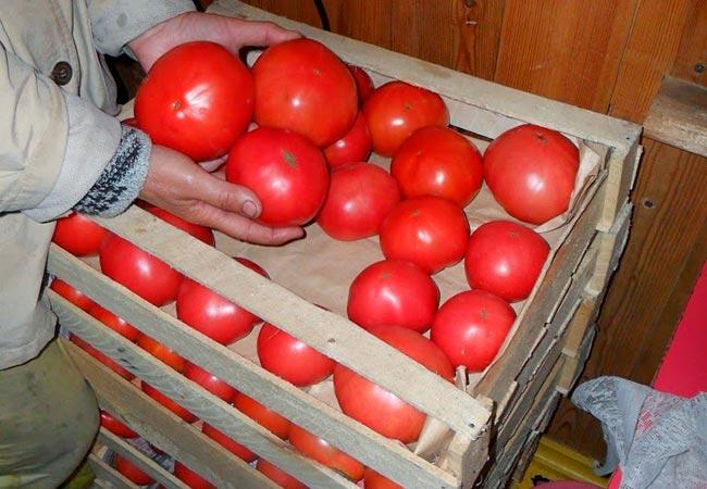 Плоды томатов в ящике