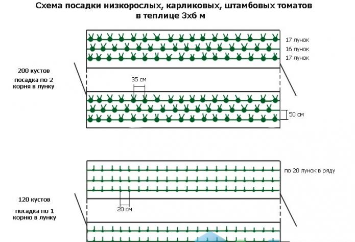 Трёхстрочная схема посадки томатов