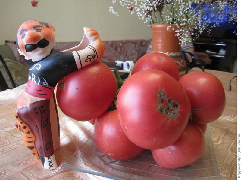 Томат Малиновый деликатес F1: фото помидоров, отзывы об урожайности куста, описание сорта и его характеристика