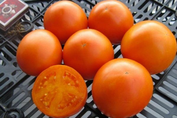 Плоды томата Апельсин