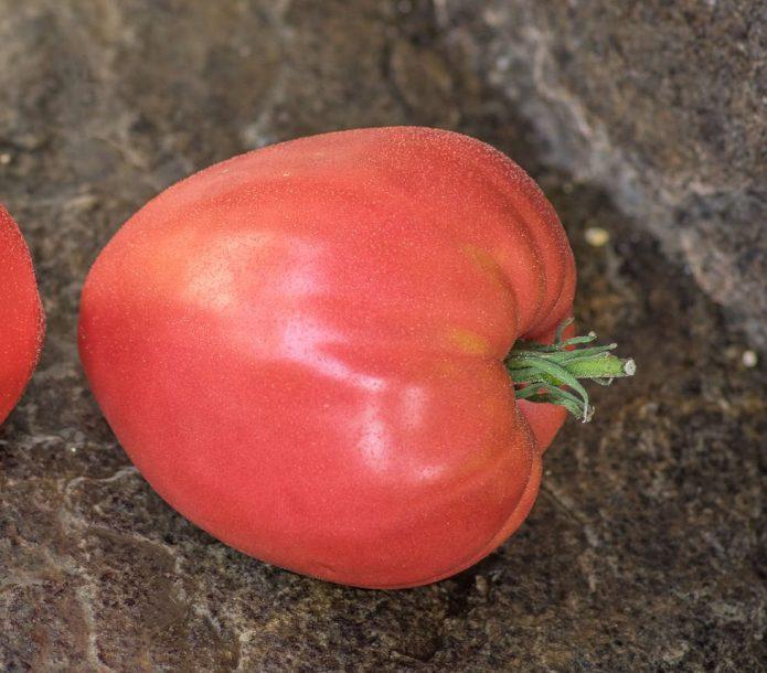 Плод томата Кардинал