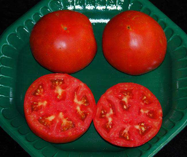Плоды томата Подснежник в разрезе