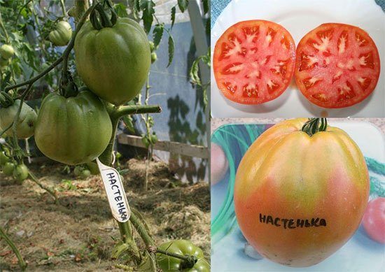Триптих — плоды томата Настенька