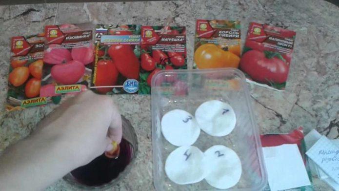 Подготовка семян томатов к стратификации