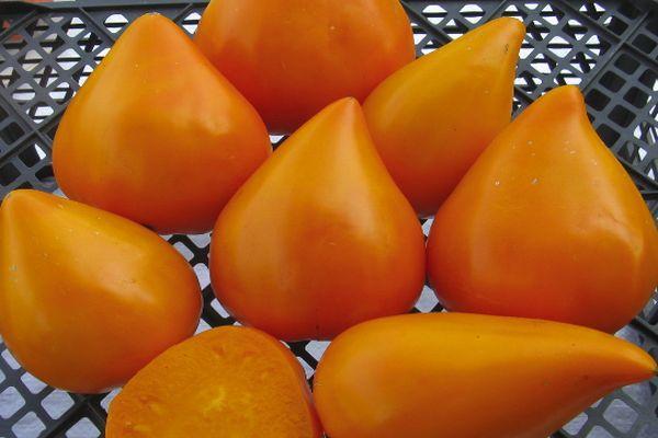 Томаты Оранжевая клубника