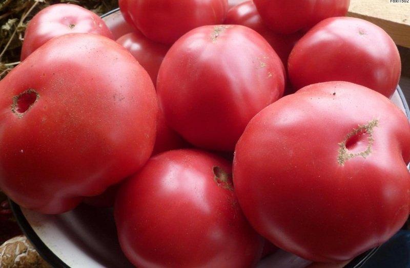 Томат Шапка Мономаха характеристика и описание сорта урожайность с фото
