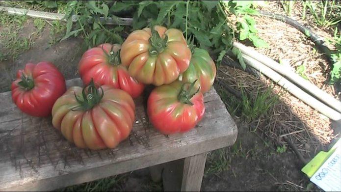 Плоды томата Грибное лукошко