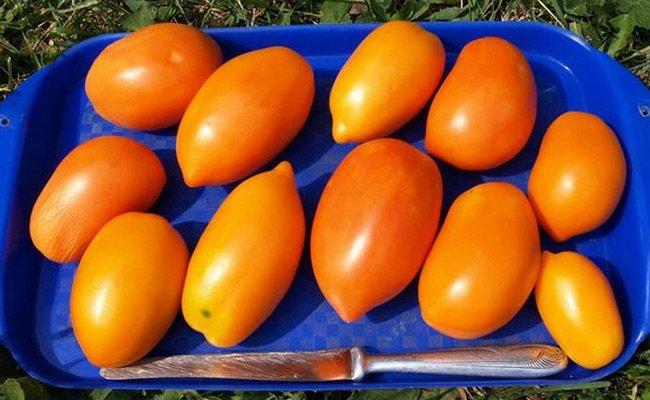 Плоды томата Чухлома