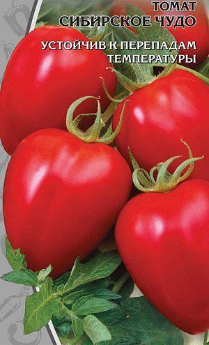 Плоды томата Сибирское чудо