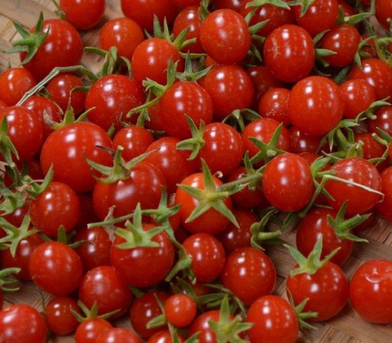 Томат Миллионер описание и характеристика сорта урожайность с фото