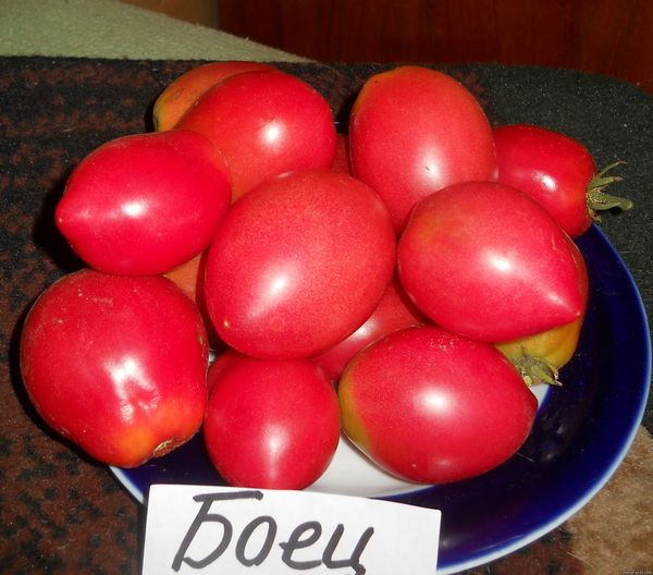 Плоды томата Боец