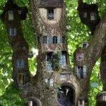 Город на дереве