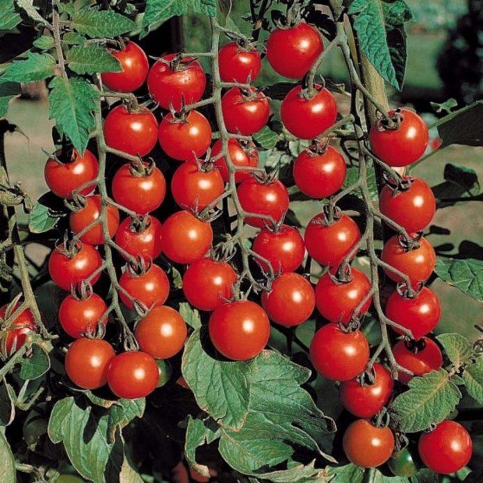 Плоды Дюймовочки