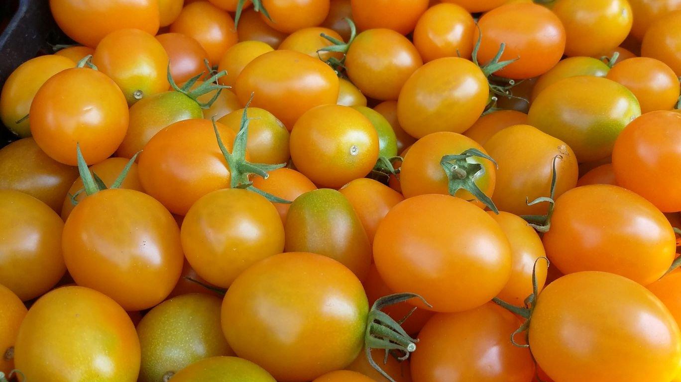 обсудят желтый томат картинки ранеебронирование отдых путешествие