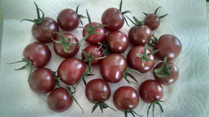 Урожай томатов Вишенка Чёрная