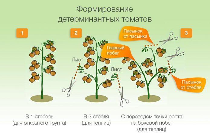 Формировка куста томата