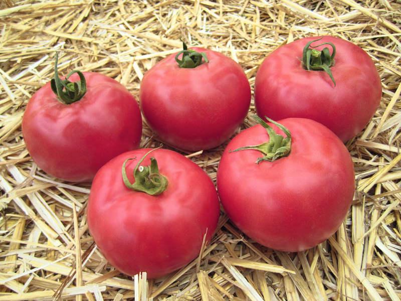 Феерия вкуса с томатами сорта Тарпан