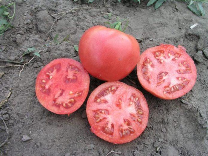 Плоды томата в разрезе