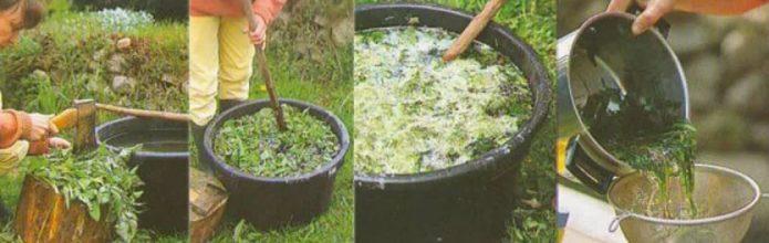 Коллаж: приготовление настоя крапивы