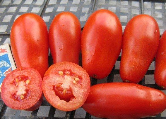 Плоды томата Французский гроздевой в разрезе