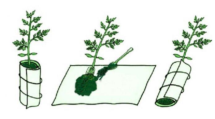 Схема посадки рассады в пелёнку