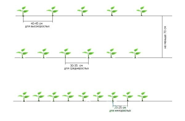 Схемы посадки
