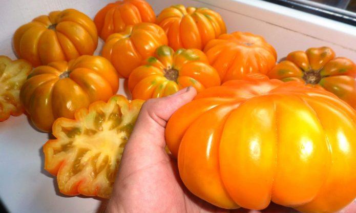 Плоды сорта Флорентийская красавица (Попенко В.Д.)
