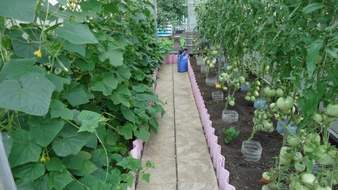 Огурцы и томаты в теплице