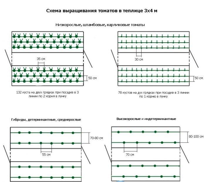 Разные схемы высадки томатов