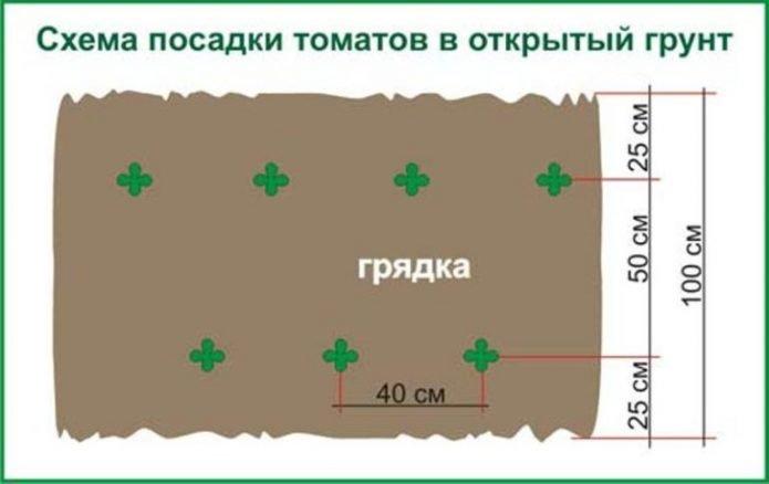 Схема высадки томатов
