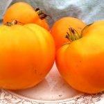 Томат Оранжевый бой
