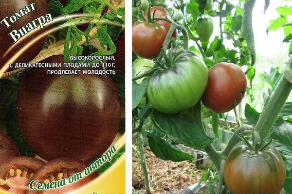 Упаковка семян томата Виагра