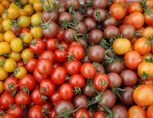 Разноцветные черри-томаты: Вишня красная, Вишня жёлтая, Вишня чёрная и другие