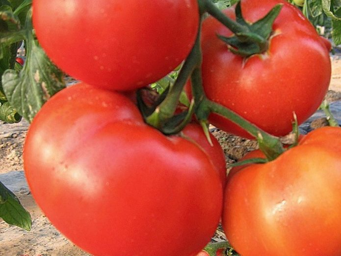 Кисть томатов Король рынка F1