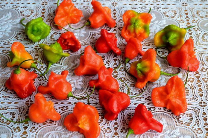 Плоды перца Колокольчик