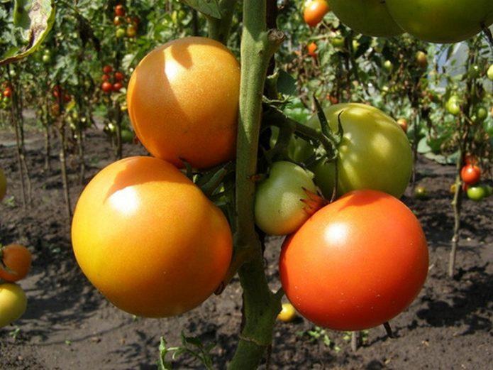 Кисть плодов