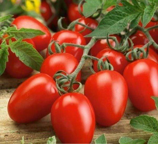 Плоды томата Маруся в кисти