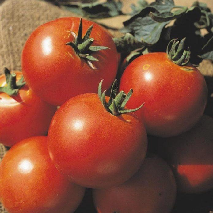 Плоды томата Дачник