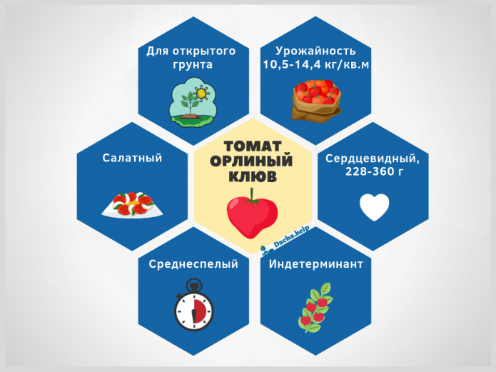 Инфографика томат Орлиный клюв