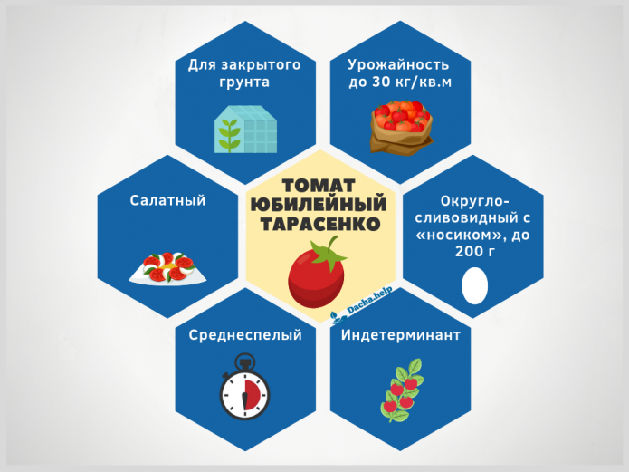 Инфографика томат Юбилейный Тарасенко