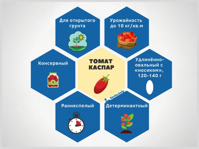Инфографика томат Каспар