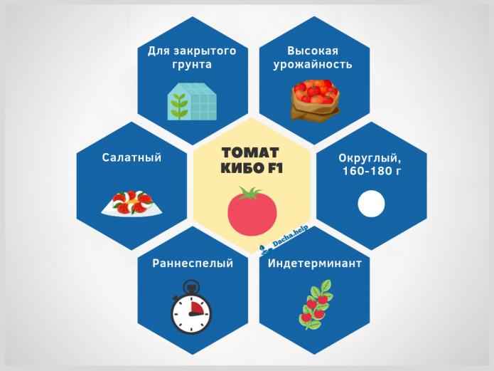Инфографика сорт томата Кибо