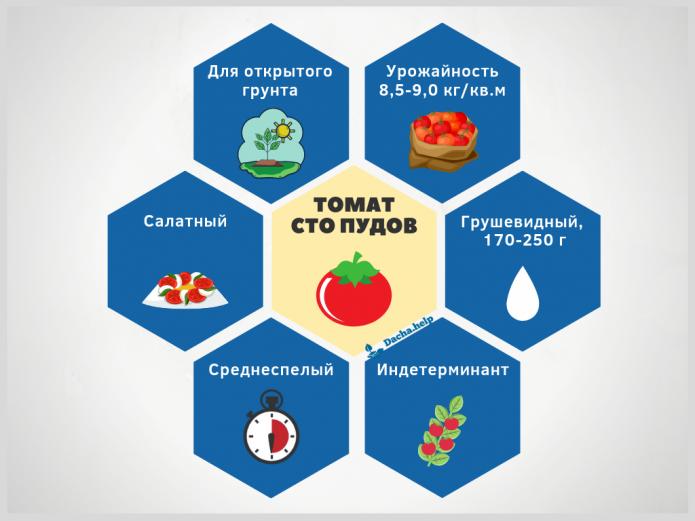 Инфографика сорта томата Сто пудов по данным Госреестра